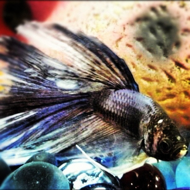 Fish Can Be Truly Beautiful Pets We Love The Unique