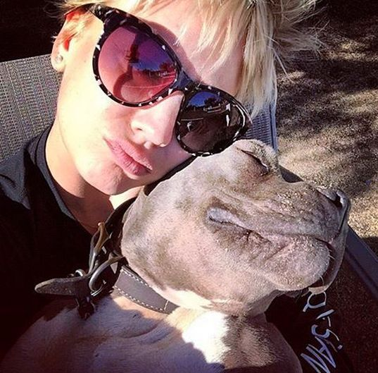 22 Celebrities Who Are Crazy In Love With Their Pit Bulls