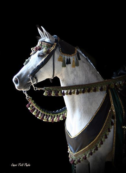 •.♡.•this white horse is waiting to dash off to help his owner rescue his fair maiden