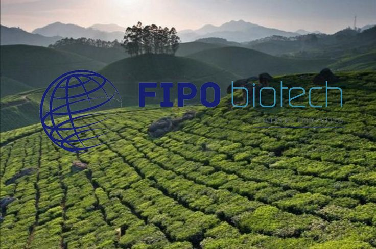 Prebioticos y Extractos vegetales extracción purificación concentración ...