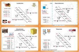 Afbeeldingsresultaat voor metriek stelsel alles telt