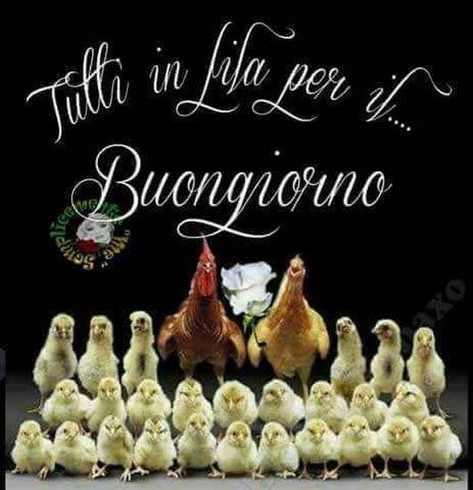 Best 25 buongiorno ideas on pinterest il piccolo for Buongiorno divertente sms