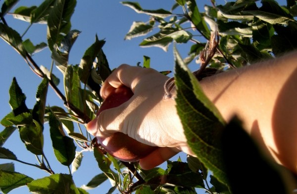 Apple Picking...oh, how I miss it! | Halloween & Other Autumnal ...