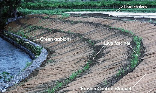 View of four different bioengineering practices - green gabions, live fascines, erosion control blankets, live stakes - installed to stabilize the banks of the Río Loco.
