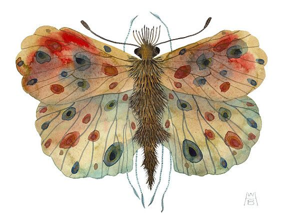 Giant Fritillary original watercolor painting by GollyBard on Etsy