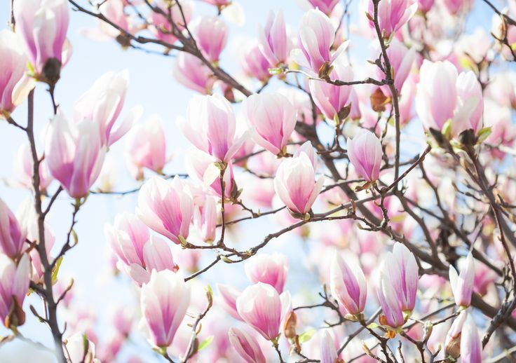 13 Flowering Trees for Year-Round Color | HGTV