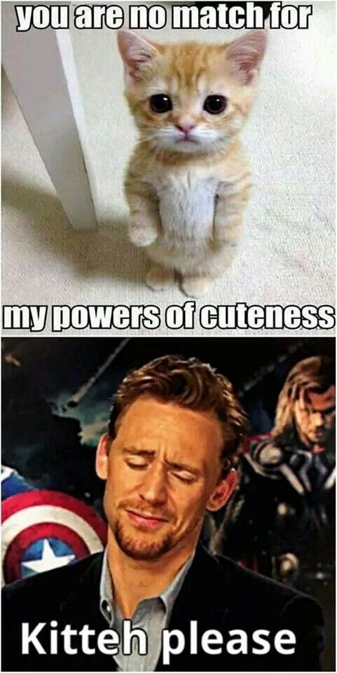 Kitteh is no match for Tom Hiddleston.