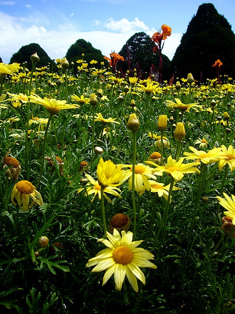 Flowers~~