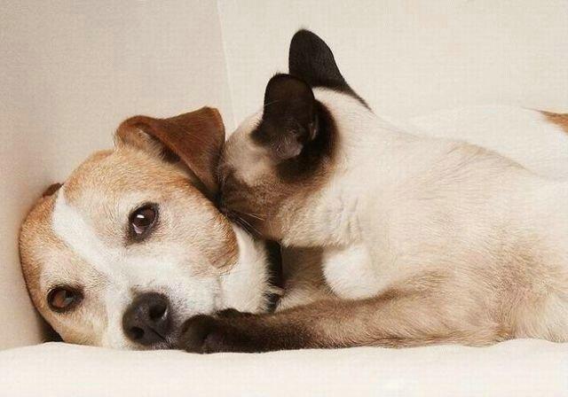 Дружба животных: кот и собака. Фото