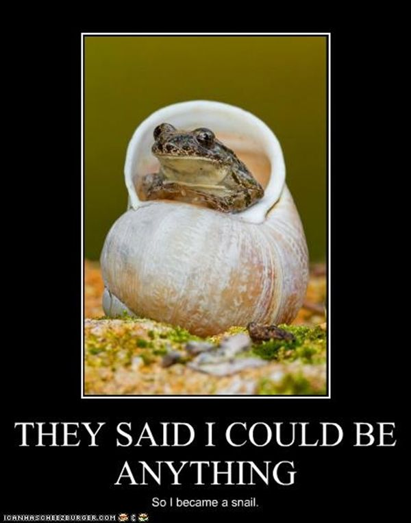 animal memes tumblr - photo #40