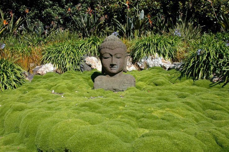 Waiheke Island Garden Safari - Annual event in November each year