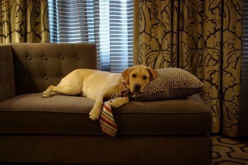 Pet sitting and dog walking for guests of pet-friendly hotels in Jacksonville, St. Augustine, & surrounding areas in northeast Florida.