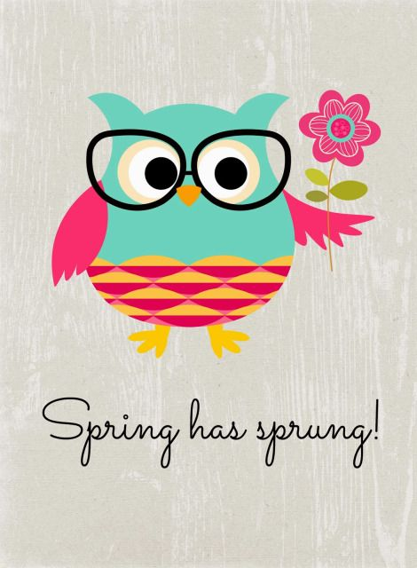'Spring has Sprung' Owl by Stacey of Glued to my Crafts