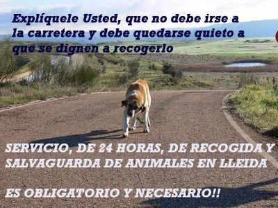 """PROTECTORA DE ANIMALES"""" AMICS DELS ANIMALS DEL SEGRIÀ"""" LLEIDA: SERVICIO DE RECOGIDA Y SALVAGUARDA DE ANIMALES ABA..."""