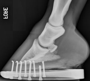 Equine Foot... Probably the coolest thing I've ever seen. <3 Vet xray!