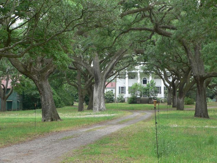 slavery on southern plantation Eleven southern states attempted to secede from the union, precipitating the  civil  that an end to the slave trade also jeopardized the entire plantation  system.