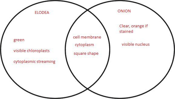 Plant Animal Cell Venn Diagram Best Of 1000 Images About ...