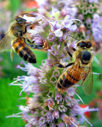 How honey bees do their job