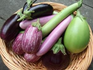 EGGPLANT: AN EXTRAVAGANZA OF RECIPES  Eggplant comes in a number of varieties, from tiny Japanese to white and magenta types, and all the familiar glossy dark purple ones in between.While eggplant isn't a nutritional superstar in terms of vitamins, and minerals compared to green veggies, it still boasts its share, as well as being a good source of dietary fiber as well as a few valuable antioxidants.