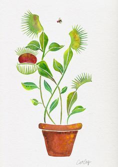 Venus Fly Trap Watercolor Art Print by Cat Coquillette
