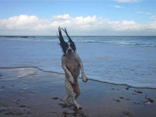 いったいなにがwww「史上最高のクオリティ」と呼び名の高いイヌ写真