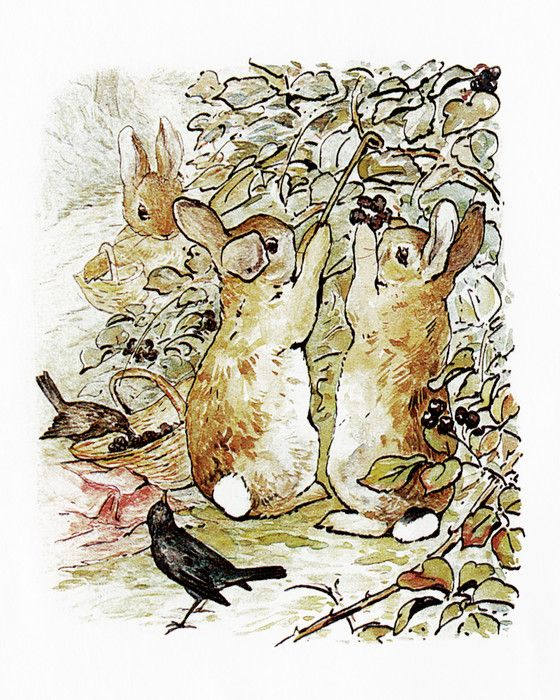 the tale of peter rabbit by beatrix potter pdf