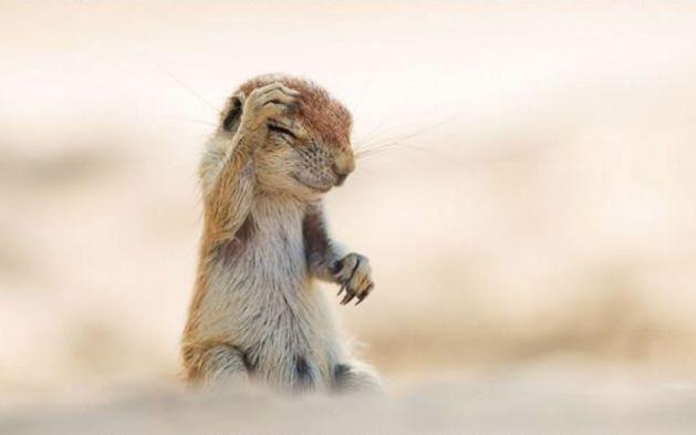 Ödüllü komik hayvan fotoğrafları