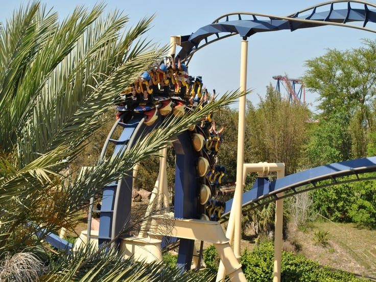 17 Best images about Busch Gardens Tampa FL on Pinterest