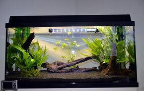 """""""Gambarium"""": Gambario de 120 litros para gambas Caridinas"""