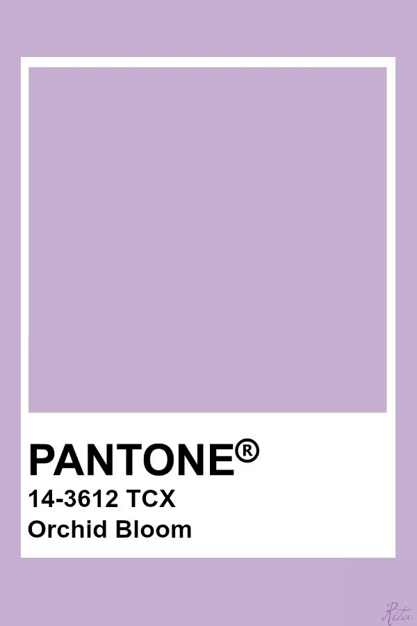 Pantone Orchid Bloom My My My In 2019 Paint Color