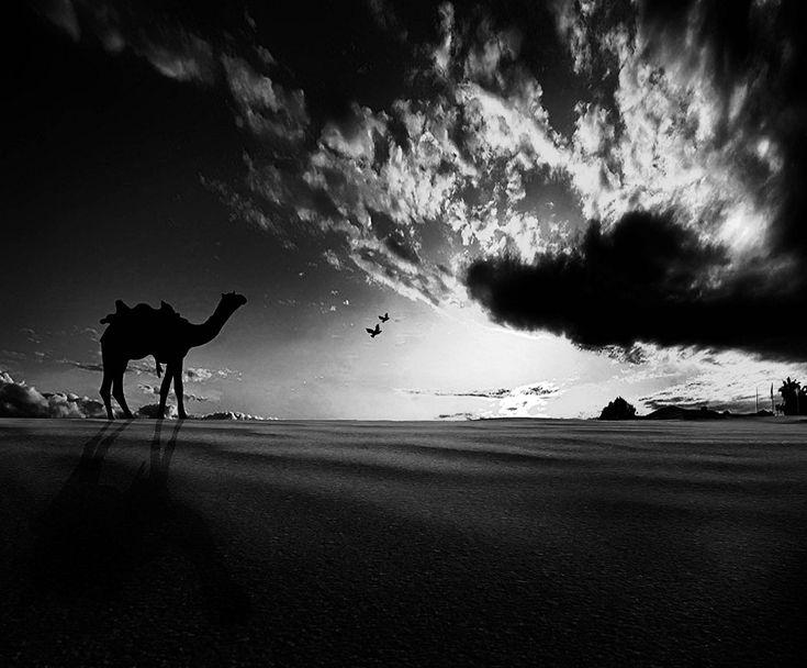 Wandering Camel, Before the Rain