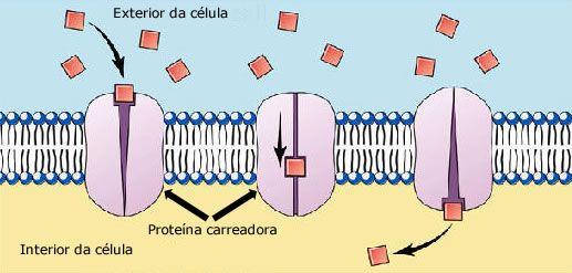 implica a interação das moléculas ou íons com proteína carreadora que facilita sua passagem através da membrana,