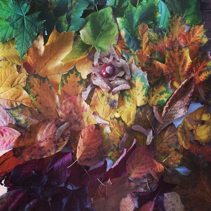 Autumn in our garden leaf collage