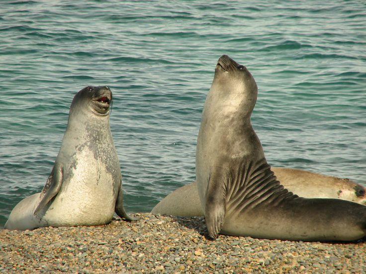 Te divertirás mucho. | 27 Imágenes de ballenas y pingüinos patagónicos que despertarán tus deseos de viajar a conocerlos