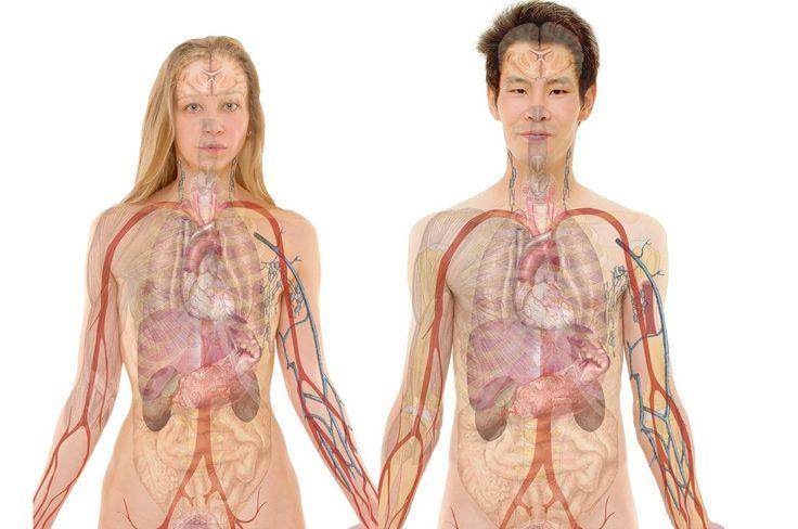 Vaše tělo je jako přesné hodiny. Každý orgán v těle má časový harmonogram, podle něhož se regeneruje. Pokud vás v určité části dne trápí například bolesti hlavy, je to proto, že některé z vašich orgánů se snaží odstranit škodliviny a tělo všechnu energii směřuje do tohoto místa. 1. Plíce Plíce jsou prvním orgánem, který se …