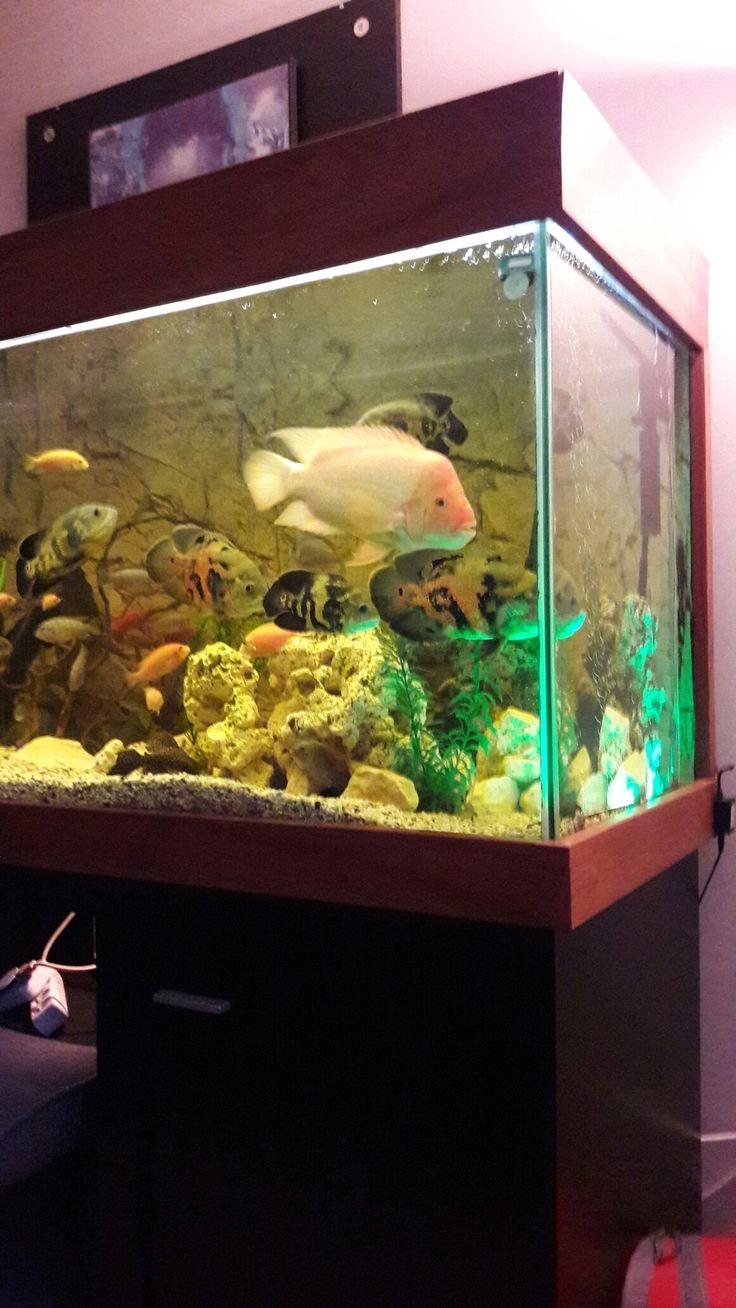 Fish aquarium olx delhi - Fish Aquariumsaquarium Fishaquarium Terrariumcichlid Fishflowerfreshwater Aquariumfish Tankstropical Fishocean Life