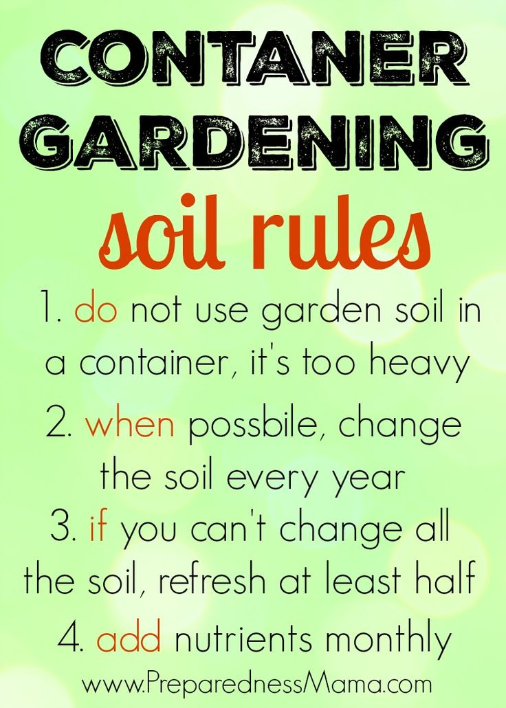 Want a successful container garden? Follow these few simple rules | PreparednessMama
