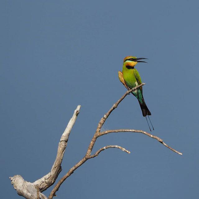 Rainbow Bee Eaters are a common sight around Kakadu National Park   Inspiring travel photos of Australia   See Something New