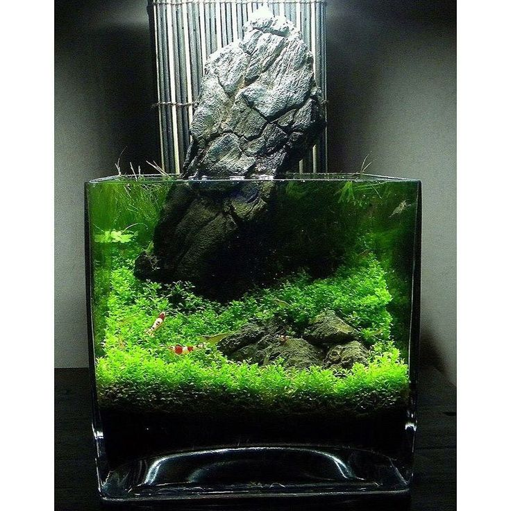 Aquascape Design 411 best aquascape images on pinterest | aquascaping, aquarium