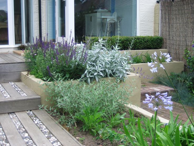 Herbs at the top fill this bed beautifully.  The Buxus on the right provides a green backdrop to the planting and the Caryopteris in the lower bed will continue the blue flowers going through high summer