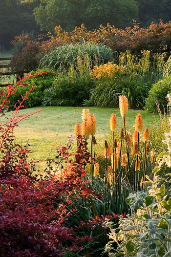 Pettifers This Oxfordshire country garden is designed for year-round interest.     Border with Berberis and Kniphofia 'Tawny King'.   Photographed by Clive Nichols.
