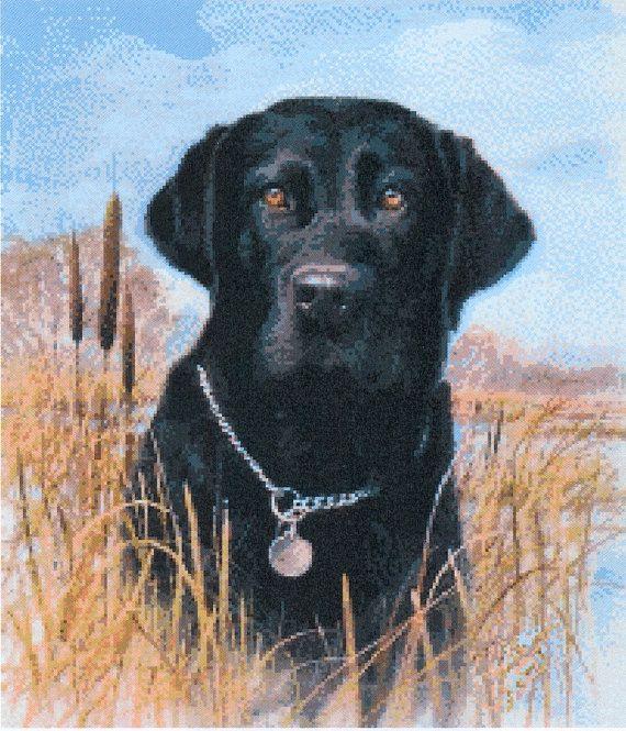 Fabulous Cross Stitch Chart    Black Labrador (A39)    Design Size 36.8cm x 43cm on 14 count Aida    (Stitch count 203 x 237)      *** PLEASE NOTE***