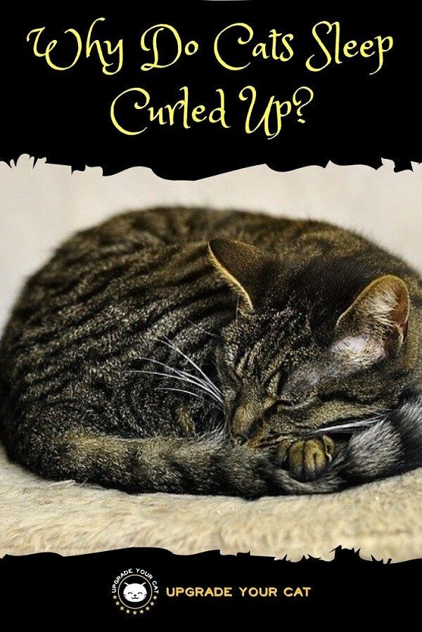 Why Do Cats Sleep Curled Up Making Sense Of It With Images Cat Behavior Cat Sleeping Cats