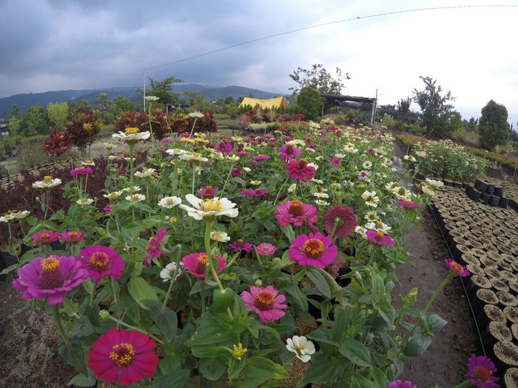 Flower can fresh your soul, malang - east java