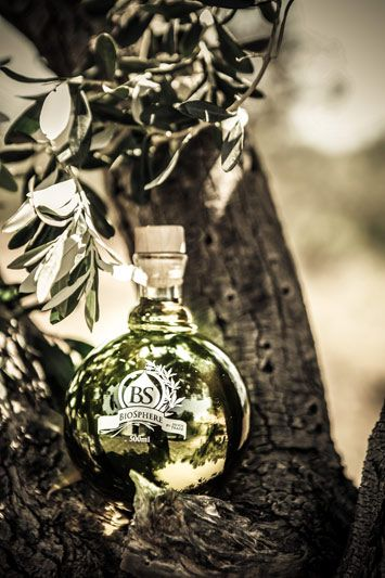 Gallery ‹ Noostrade.com | First harvest of single olive grove in Messenia.Premium organic unfiltered extra virgin olive oil.