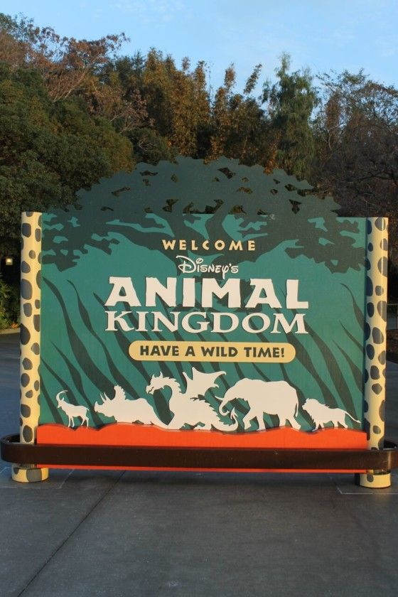 Disney's Animal Kingdom is one of the 4 main parks at Disney World. Learn 10 best kept secrets of Disney's Animal Kingdom today.  Tree of Life Did you know that the Tree of Life in Disney's Animal Kingdom has over 300 animals carved into it? That is an impressive number of carvings. The tree …