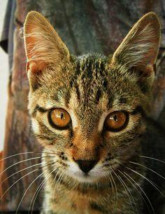 Most Passionate Female Warrior Cat