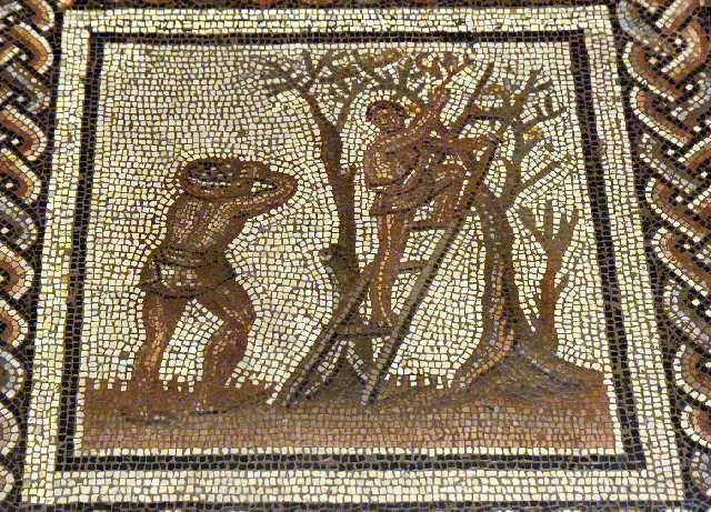 52 best olive olivier moulin huile images on - Cuisine romaine antique ...