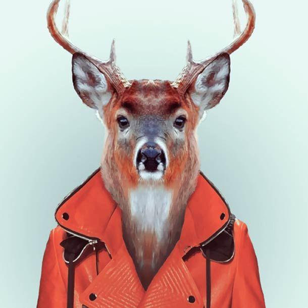 """""""Zoo Portraits"""", un projet du photographeYago Partal, qui mélange photographie de mode et animaux dans une excellente série de portraits d'animaux habillés"""