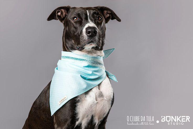 "Pañuelo para perros ""Romantic"" Dots verde agua, cinta tricot/velvet, 100% algodón. Ideal para príncipes y princesas caninos... Adóralo en O Clube da Tula!  http://oclubedatula.com/es/produtos/item/panuelo-romantic-dots-verde-agua-cinta-tricot-velvet/"